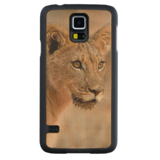 Portrait d'un jeune lion masculin (Panthera Lion) Coque Slim Galaxy S5 En Érable