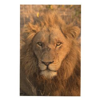 Portrait d'un lion masculin impression sur bois