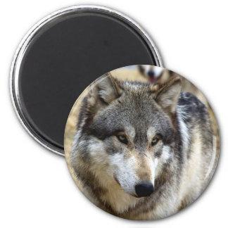 Portrait d'un loup magnet rond 8 cm