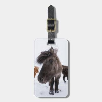 Portrait islandais de cheval, Islande Étiquettes Bagages