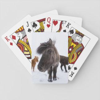Portrait islandais de cheval, Islande Jeux De Cartes