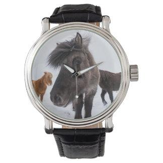 Portrait islandais de cheval, Islande Montres Bracelet