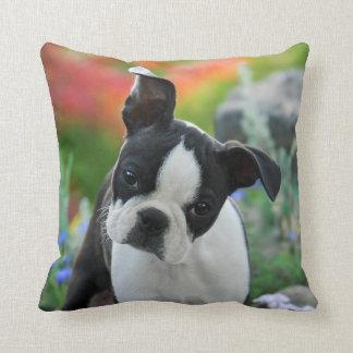 Portrait mignon de chiot de chien de Boston Coussins Carrés