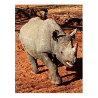 Portrait noir de rhinocéros carte postale