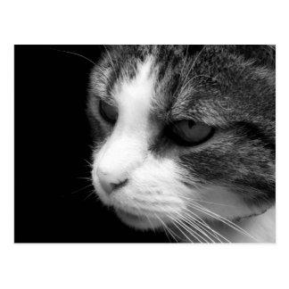 Portrait noir et blanc de chat tigré - carte carte postale