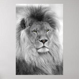 lion blanc noir posters lion blanc noir affiches. Black Bedroom Furniture Sets. Home Design Ideas