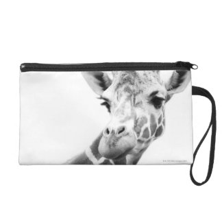 Portrait noir et blanc d'une girafe dragonne