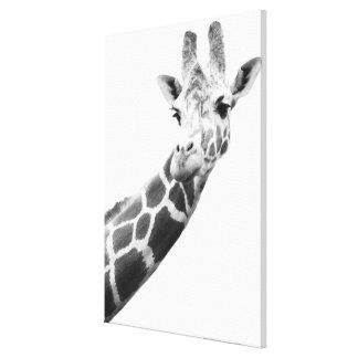 Portrait noir et blanc d'une girafe toiles