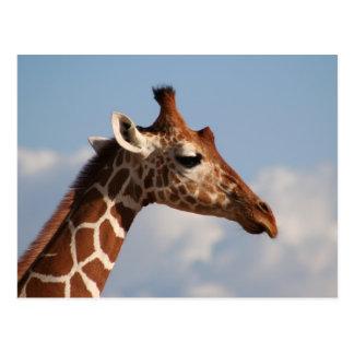 Portrait réticulé de girafe carte postale