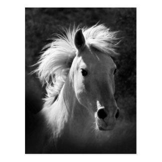 Portrait V de cheval Carte Postale
