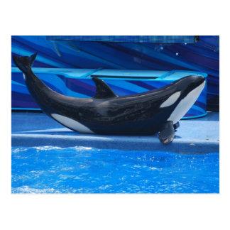 Pose de la carte postale d'orque