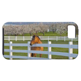 Poses de cheval par le verger de cerise à tête coques iPhone 5