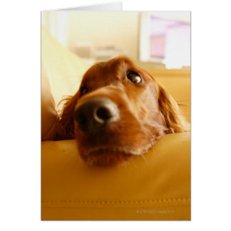 Poseur irlandais sur le sofa carte de vœux