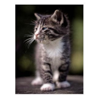 Position de chaton et strabisme carte postale