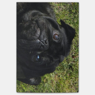 Post-it® black-pug.png