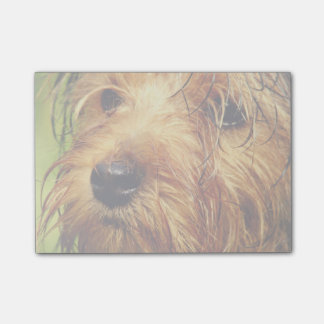 Post-it® Chien adorable de Terrier avec un visage humide