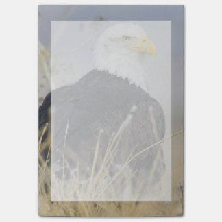 Post-it® Eagle chauve au sol