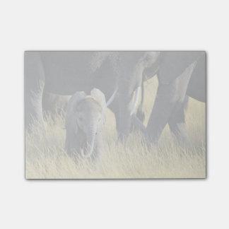 Post-it® Éléphant de bébé