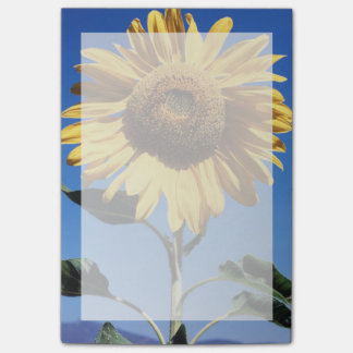 Post-it® La Californie, un tournesol gigantesque