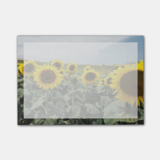 Post-it® La France Provence, vue de gisement de tournesols