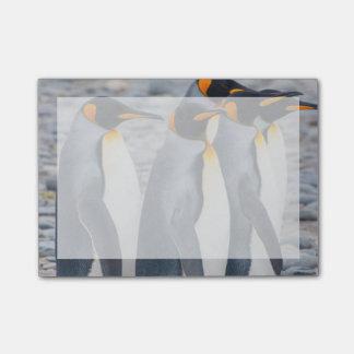 Post-it® La Géorgie du sud. Pingouins de roi