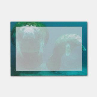 Post-it® Lamantin de mère avec son veau dans Crystal River