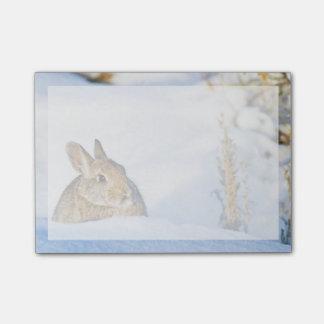 Post-it® Le Wyoming, le comté de Sublette, le lapin 1 de