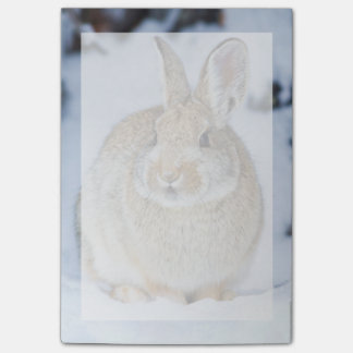 Post-it® Le Wyoming, le comté de Sublette, le lapin 2 de