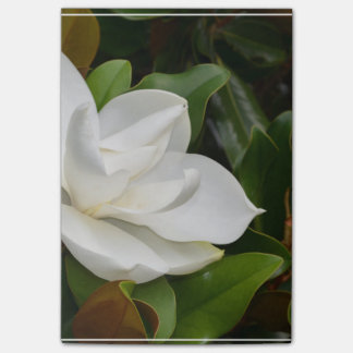 Post-it® Magnolia blanche