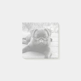 Post-it® Photo noire et blanche de carlin d'amant mignon de
