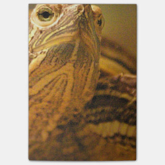 Post-it® Tortue