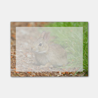 Post-it® WA, Redmond, lapin de bébé de lapin oriental