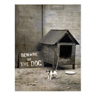 Postards drôles de chien carte postale