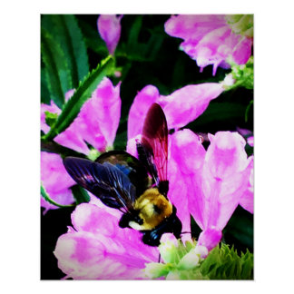 """Poster 16"""" x 20"""" collection des yeux de l'abeille"""