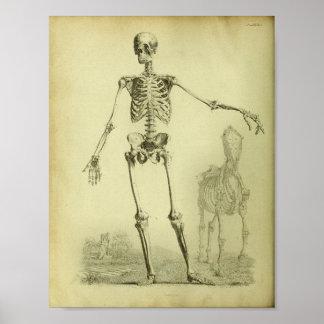 Poster 1824 copie squelettique d'anatomie d'humain et de
