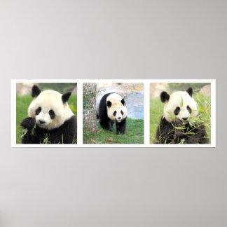 Poster 30x90 Panda géant