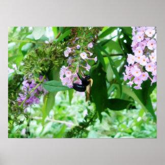 Poster Abeille de charpentier orientale sur la fleur de