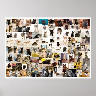Poster Académie de chaton affiche de 1 an