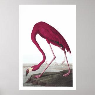 Poster Affiche américaine d'illustration de flamant