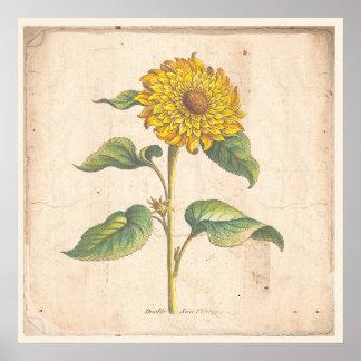 Poster Affiche botanique antique d'impression de