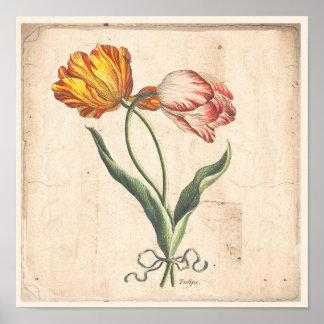 Poster Affiche botanique antique d'impression de tulipes