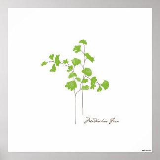 Poster Affiche botanique de l'illustration | de fougère