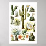 Poster Affiche botanique d'illustration de cactus vintage