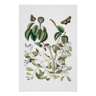 Poster affiche botanique verte vintage