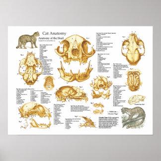 Poster Affiche d'anatomie de crâne de chat domestique