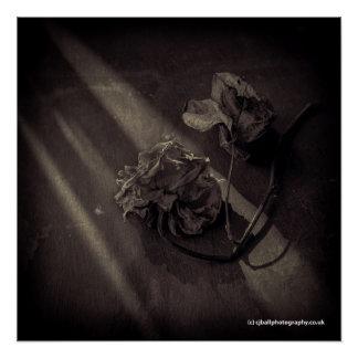 Poster Affiche d'art - fleur - rose de monochrome