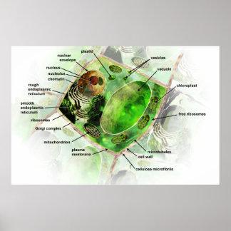 Poster Affiche de cellules de plante