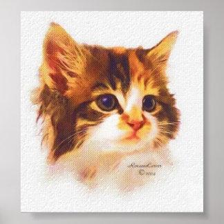 Poster Affiche de chaton