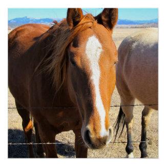 Poster Affiche de cheval