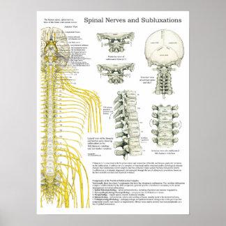 Poster Affiche de chiropractie de nerfs rachidiens et de